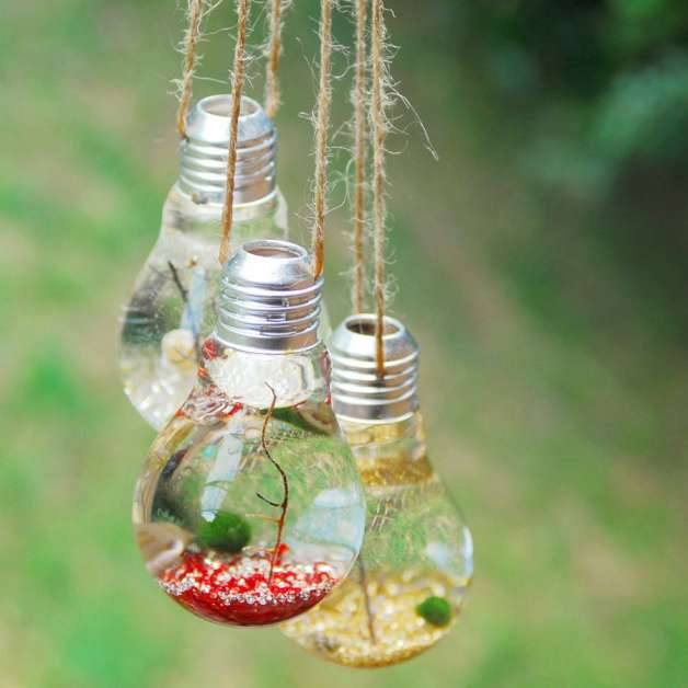 http://myamazingthings.com/wp-content/uploads/2016/11/original_light-bulb-hanging-marimo-moss-ball-terrariums.jpg